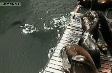 Aber noch viel schlimmer: sind die größten Trolle! | 21 Fotos, die zeigen, dass Tiere Arschlöcher sind
