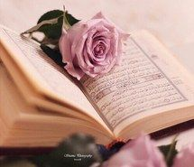 Inspiring image pink, quran, rose #4065701 by winterkiss - Resolution 499x499px - Find the image to your taste