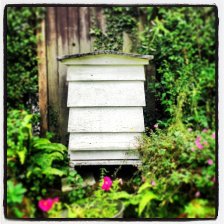 Bees at The Stanage B & B