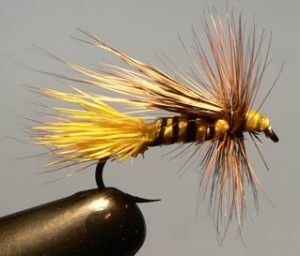 Chuck Wing Bee Fly Pattern