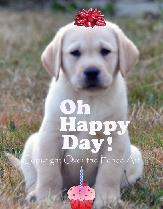 Birthday Greeting Card Labrador Card By Overthefenceart On