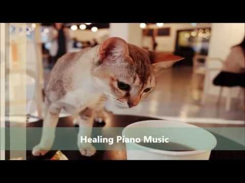 고양이가 좋아하는 음악 (편안한, 잔잔한, 우울증 치료 해소) Cats Favorite Music (Relax, Calm, Rel...