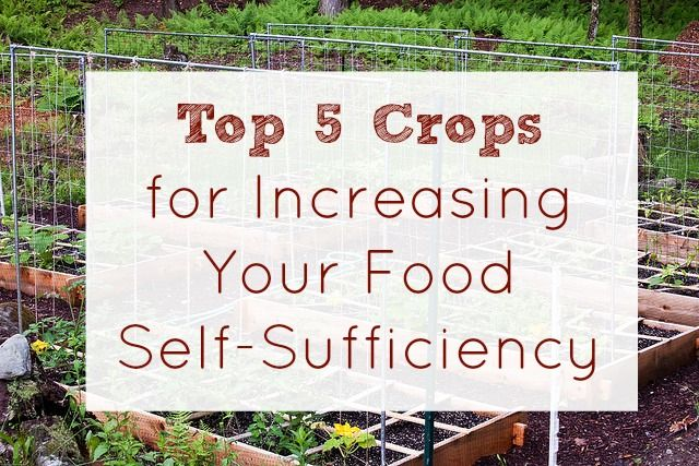 Top 5 Crops for Increasing Food Self Sufficiency - Five Little Homesteaders