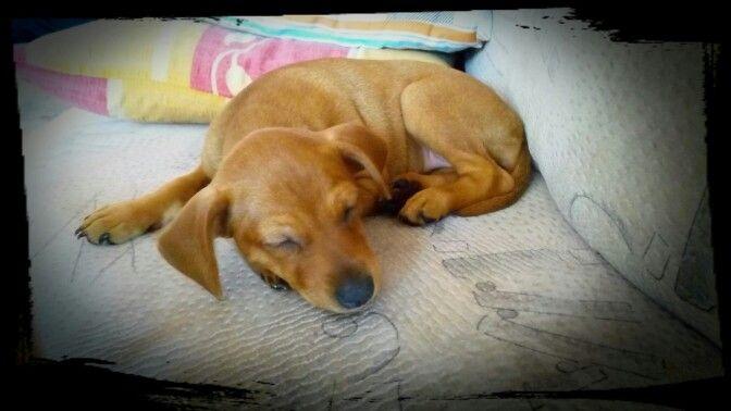 Naše štěňátko - Molly