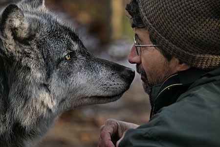 I love this photo. The Man and the Wolf are staring into each others eyes like they are looking for a way of communication.