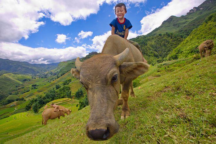 Boy and buffalo - Viet Nam, Sapa