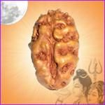 Two Face Rudraksha is a symbolic to ARDHA Nareshwar (Shiva and Parvati). Those who wear it, are believed to have immense fame. It denotes trustworthiness and devotion. It reflects efficiently on married life of a couple. Good for Mental Peace and Pregnancies.