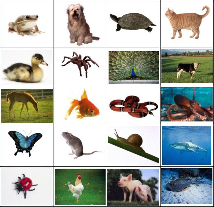 Actividad para aprender sobre los animales ov paros para imprimir spanish learning - Sobre de navidad para imprimir ...