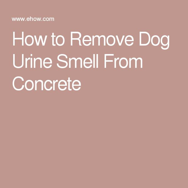 1000 Ideas About Dog Urine Remover On Pinterest Urine