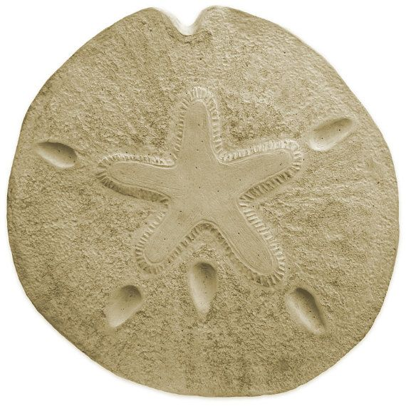 Sand Dollar Stepping Stone Mold by SaharasSupplies on Etsy