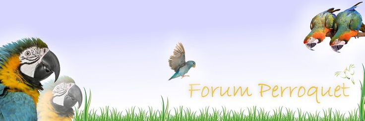 http://www.forum-perroquet.com/