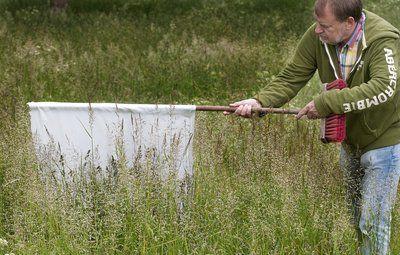 Skovflåter indtager de danske haver