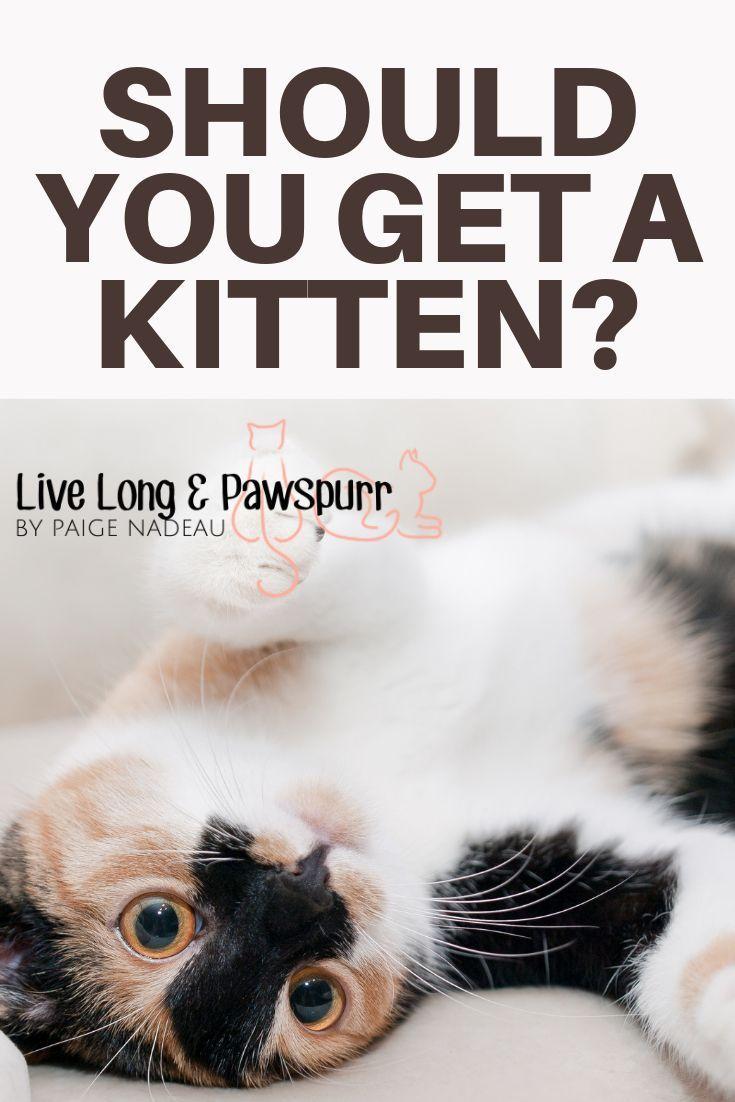 Should I Adopt A Kitten Nine Things To Consider Live Long And Pawspurr Kitten Adoption Cat Training Kitten Hacks