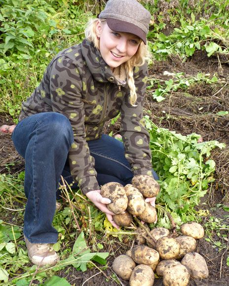 И моя картошка «засияла» — Ваше Плодородие