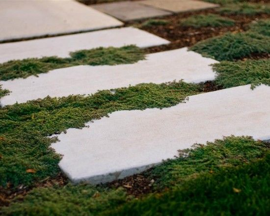 Concrete Stepping Stone Walkway With Woolly Thyme Avant