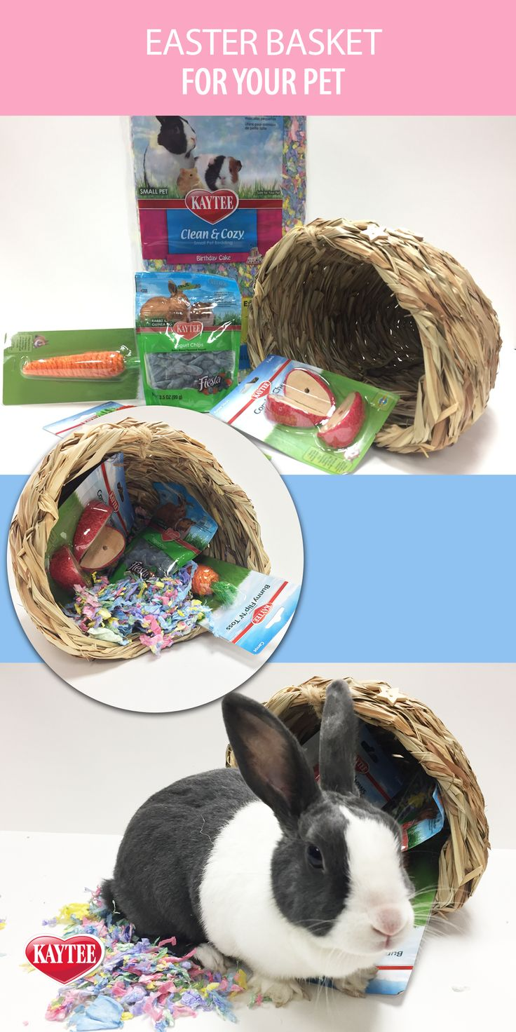 Diy Easter Basket For Your Pet Use Their Favorite Chews, Treats, A Hideout