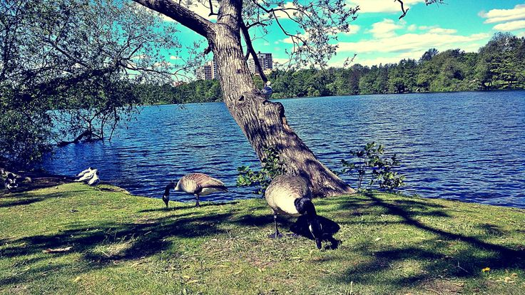 ♥️ #nature #lake #pic #photo #photography #sweden #stockholm #my #memories #shotononeplus #oneplus3t #life #trees #message #world #love #pets ♥️