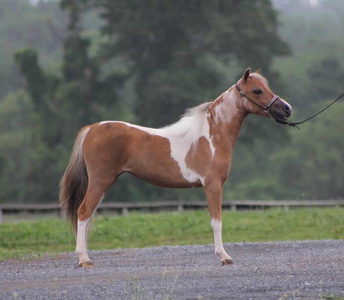 Best Horses Images On   Horses Beautiful Horses