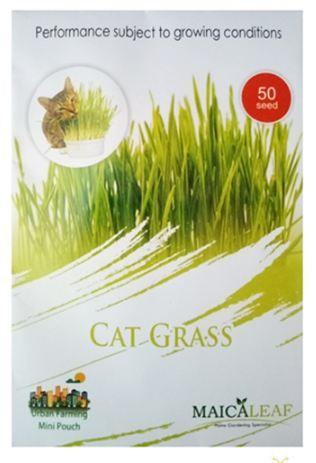 Tanaman Hias Benih Rumput Kucing  gambar benih rumput kucing