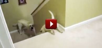 56+ Ideas Cats Funny Laughing So Hard Hilarious Watches For 2019