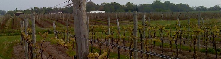 Essex County Wine tour is a must!
