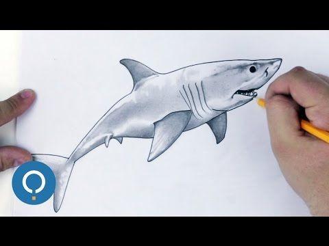 Dessin de Requin / comment dessiner un requin blanc - YouTube