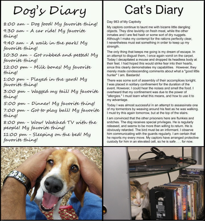 Cat Diary Dog Diary Joke