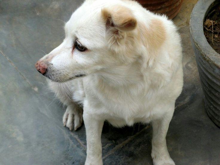 My nani's pet,Tuffy.