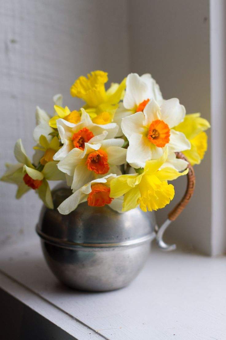beautyeveryday - Southern Beauty, Creativity, and Food - first daffodils