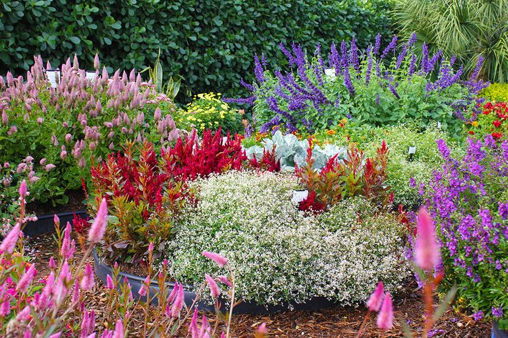 1000 Images About Garden Design Tips From Costa Farms On