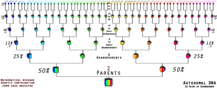 Guest post by CeCe Moore of YourGeneticGenealogist.com on autosomal DNA testing in #genealogy: DNA Testing for Genealogy - Getting Started, Part 3