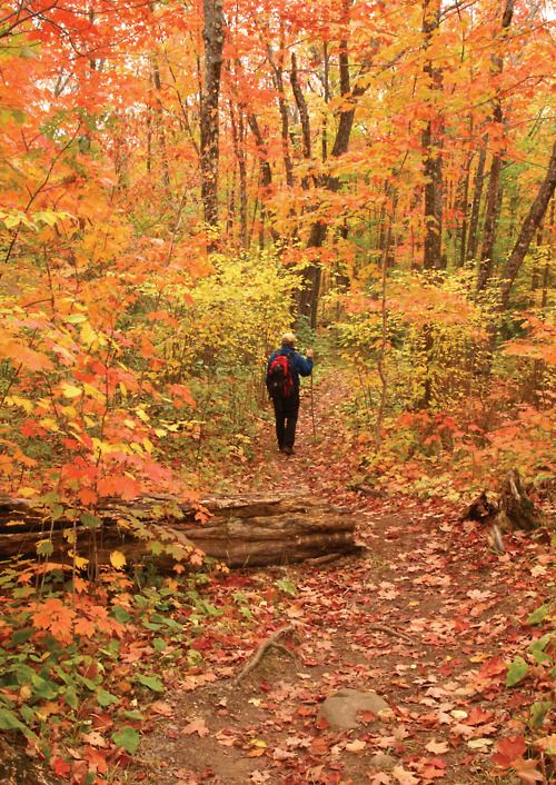 Hiking is a favorite activity in the beautiful fall forest!
