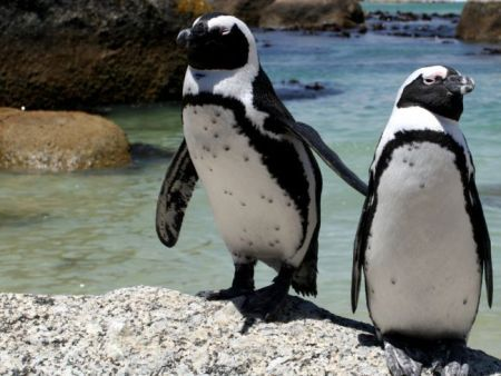 Cape Point is the most South Western Point of Africa... We will take you to Cape Point and the Good Hope Nature Reserve, Hout Bay, Seal Island, Simons Town and more!