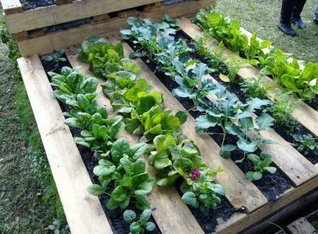 pallet gardening: Gardens Beds, Gardens Ideas, Pallets Gardens, Rai Gardens, Herbs Gardens, Pallets Ideas, Great Ideas, Wood Pallets, Old Pallets