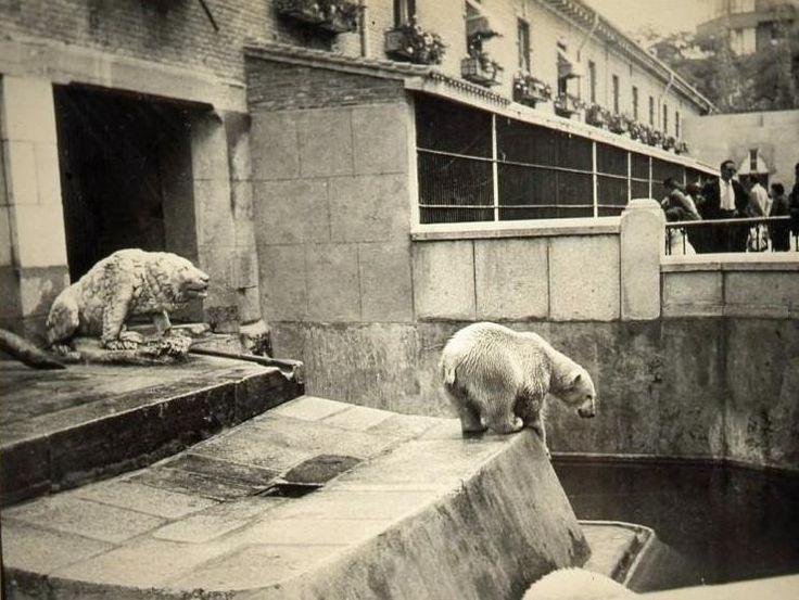 De cuando había osos polares en el Retiro, concretamente en la Casa de Fieras... #madrid