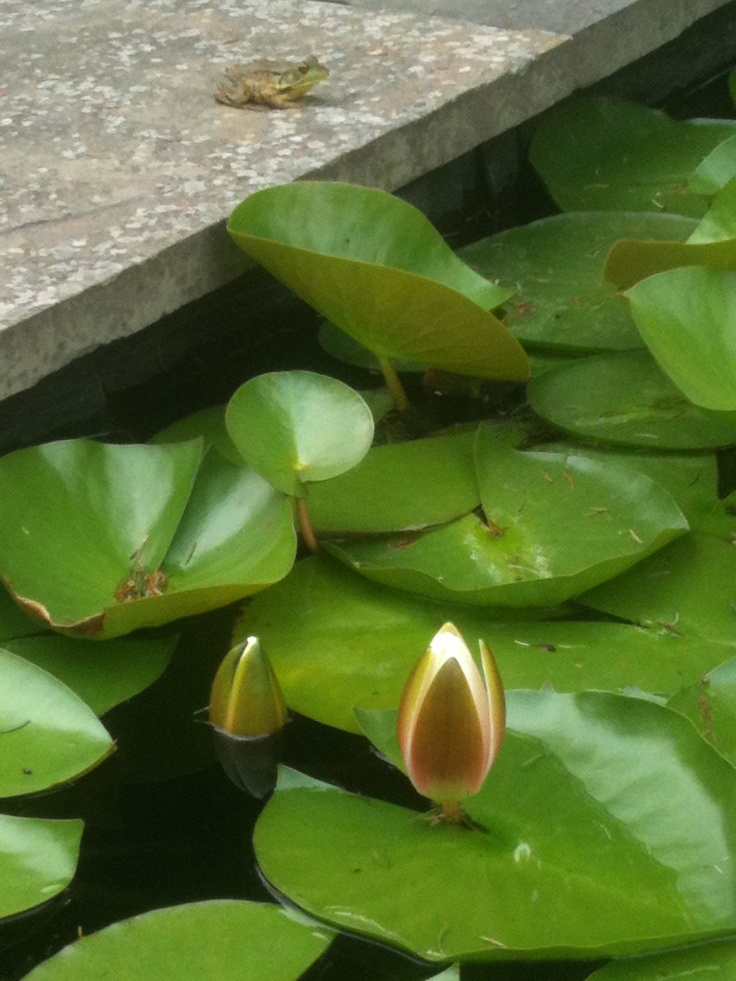 140 Best Images About Ponds And Other Garden Water Spots