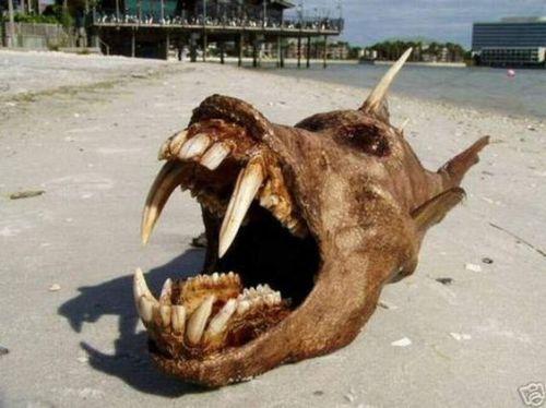 23 animais estranhos encontrados na beira da praia | SnapGlobo | Page 23