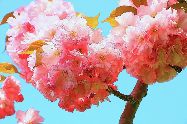 Pin By Photography By Allen Beatty On Photography By Allen Beatty Flower Art Amazing Flowers Cherry Blossom Tree