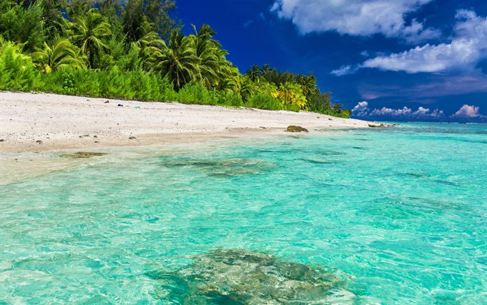 Download wallpapers tropical islands, beach, palm trees, sand, azure water, ocean, Maldives