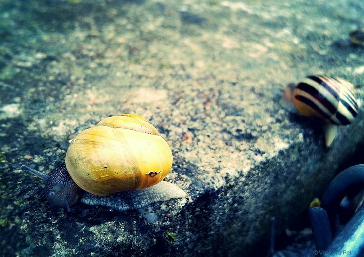 Snails; Race; Catch me if you can   © Petra Vaskova