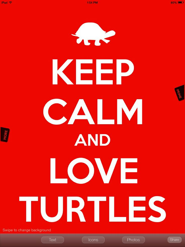 I love turtles :)