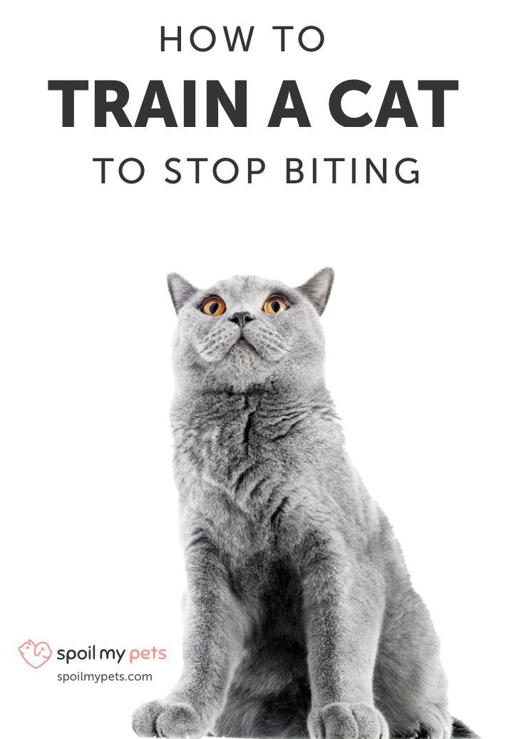 How To Train A Cat To Stop Biting In 9 Easy Steps Cat Biting Cat Training Cats