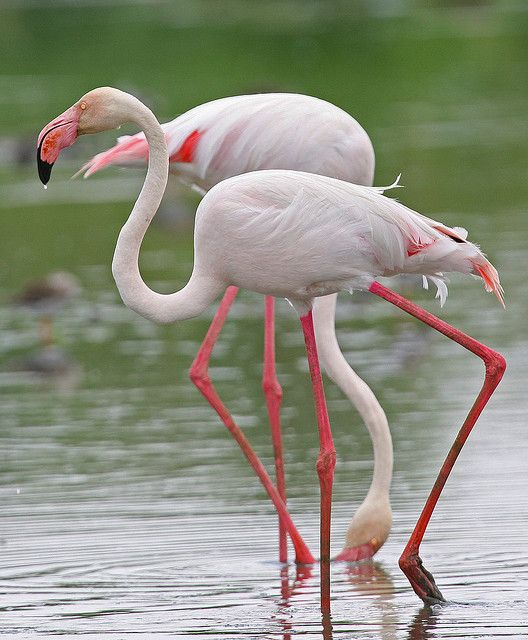 Pin De Gaby Cornejo En Flamingos...