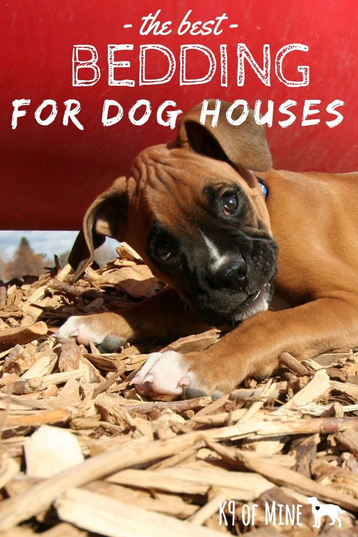 3 Best Beddings For Your Dog House Keep Your Canine Cozy Dog