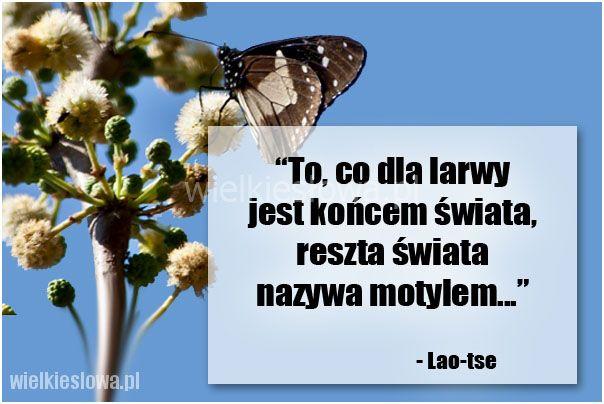 To, co dla larwy jest końcem świata... #LaoTse,  #Koniec-świata, #Przyroda-i-zwierzęta, #Świat-i-podróże