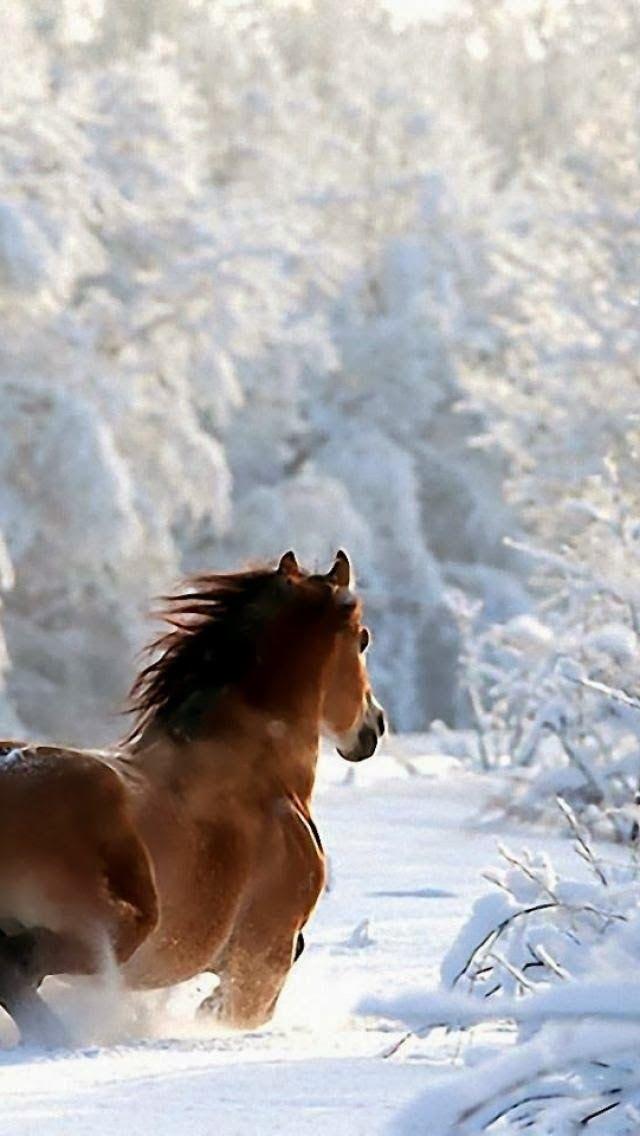 Horse, Snow, Winter