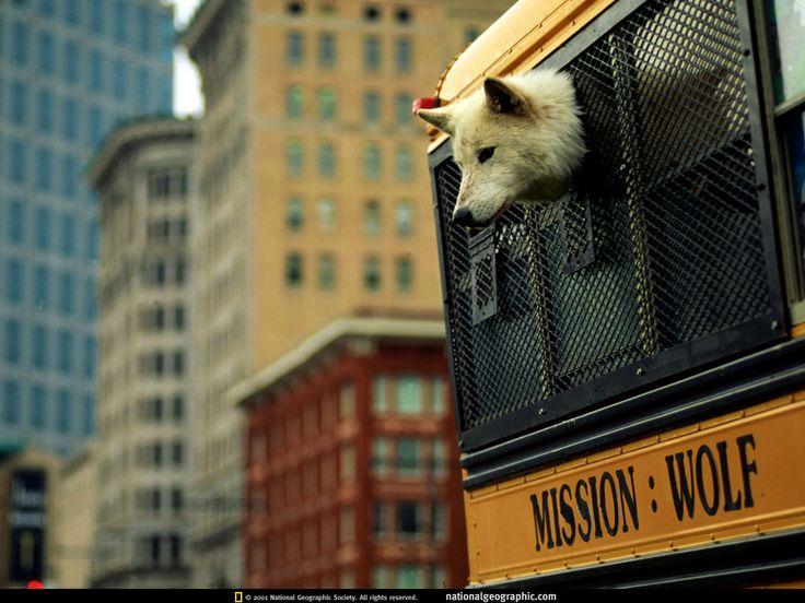 Обои на телефон - National Geographic фотографии: http://wallpapic.ru/national-geographic-photos/uncategorized/wallpaper-38193