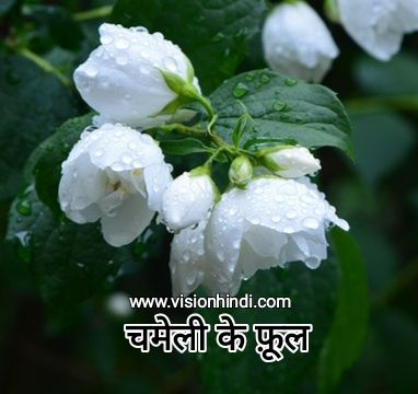 Crape Jasmine Flora Flowers Indian Flowers Leaf Flowers