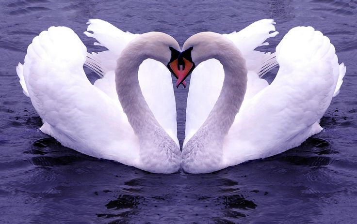 Cute love birds wallpaper, cute love birds pictures , pictures love Wallpaper