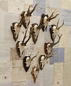 vintage antlers: Vintage Antlers, Deer Antlers, Horny Skulls, Decorating With Antlers, Classic Antlers, Antlers Horns, D R Antlers, Antlers Look